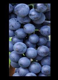 Blaufränkisch wines Austria