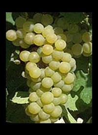 Chardonnay wijnen Chili